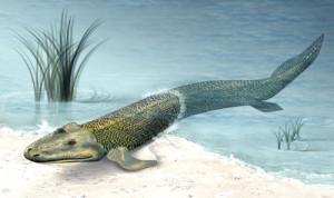 Le poisson marcheur