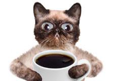 catcoffee225