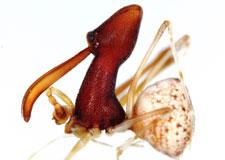 Araignée assassin