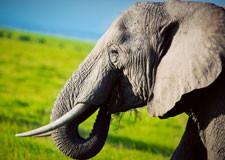 elephantafrique225