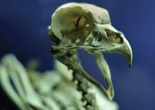 squelette225