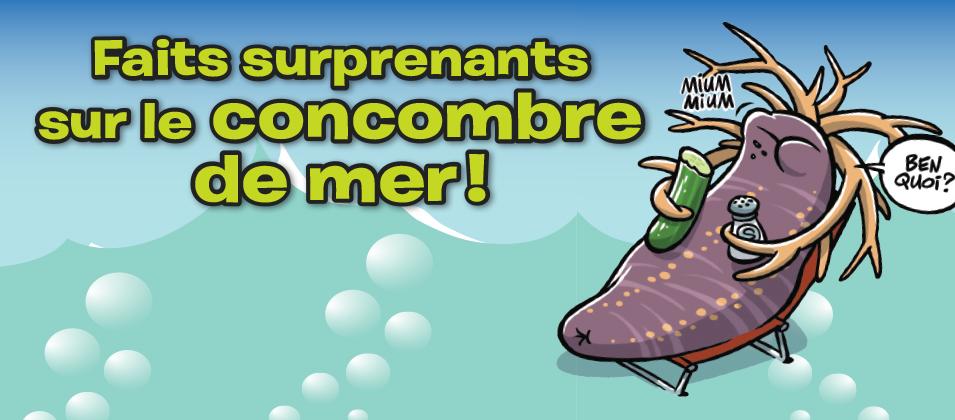 WEB_DEB_ConcombreFin