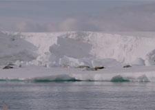 antarctik225