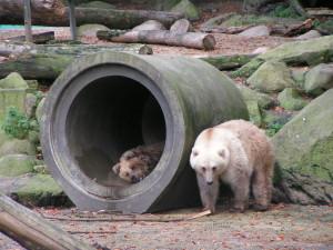 Zoo_OS_Bären