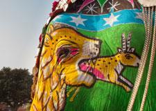 Le défilé des éléphants