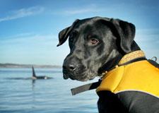 Des chiens au secours des animaux menacés