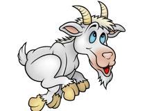 Inusité : les courses de… chèvres
