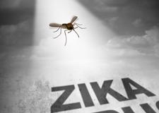 Zika, le virus mystérieux