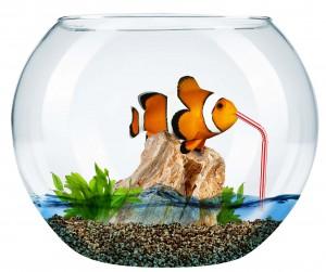 NemoSoif