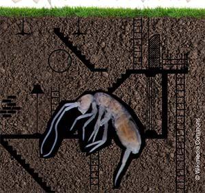 creature sous terre