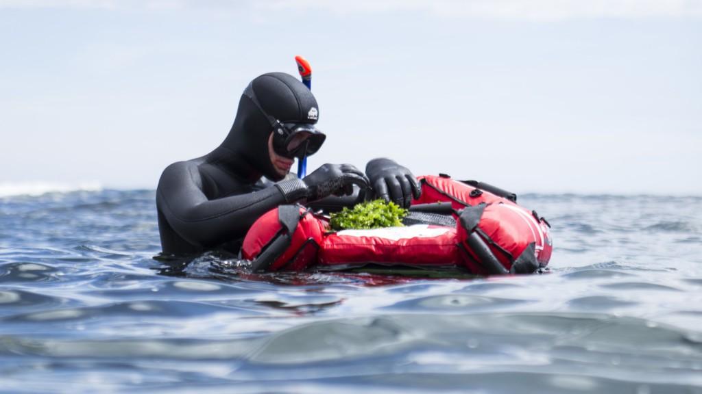 plongeur algues