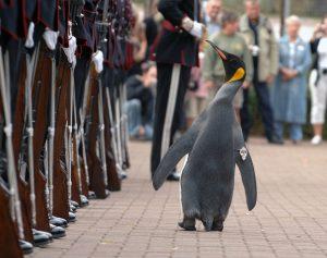 Un manchot dans la garde royale