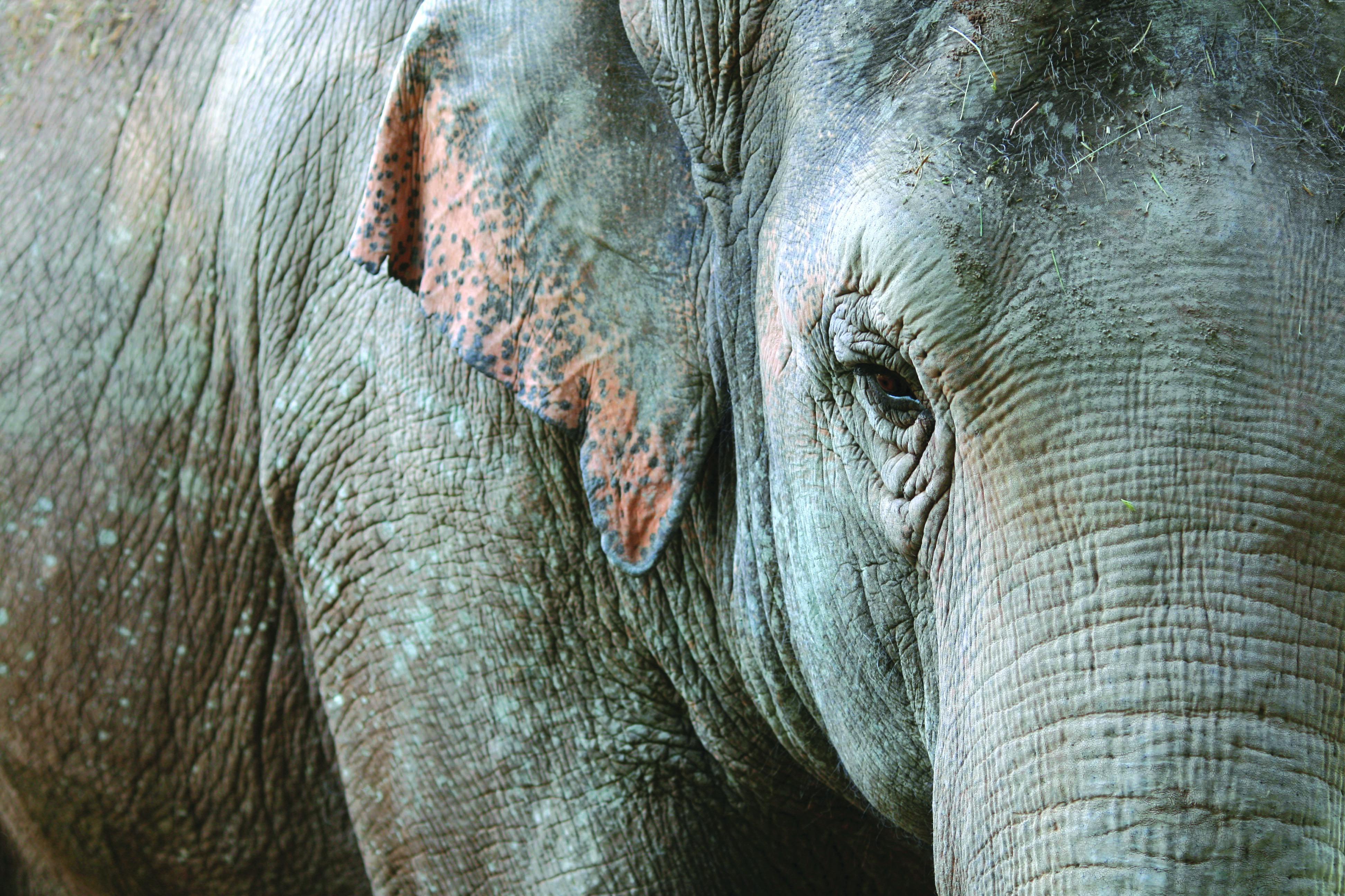 Laos : le royaume au million d'éléphants