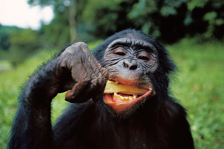 Quand la faim rend les animaux malins