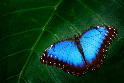 Ce que vous vouliez savoir sur les Papillons en liberté