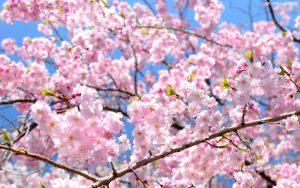 10 faits surprenants sur le printemps