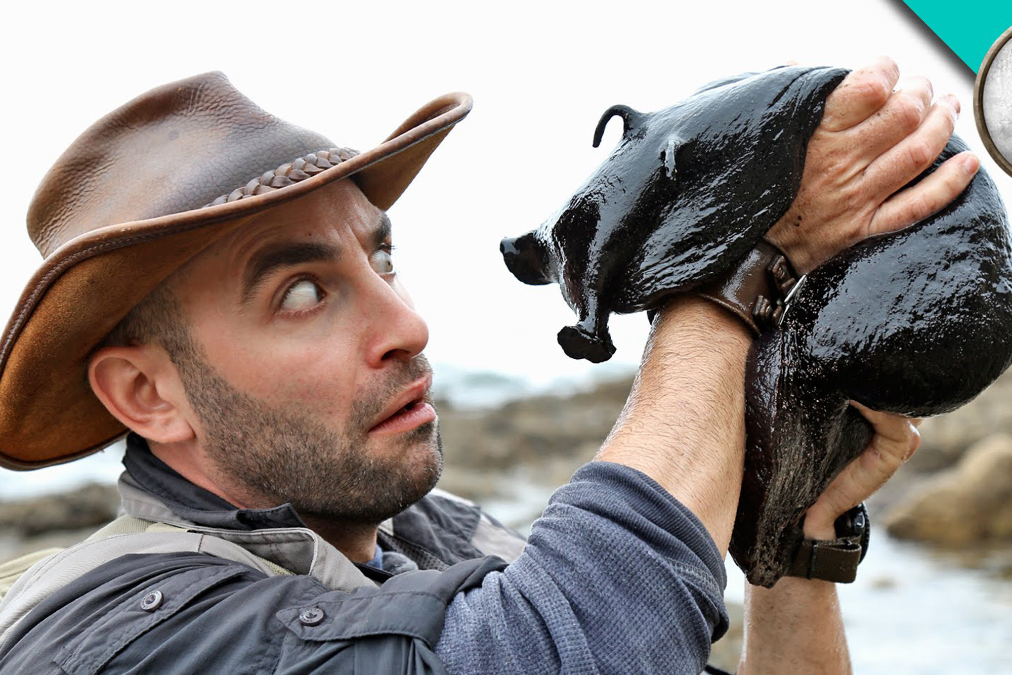 Coyote Peterson : fou de la nature