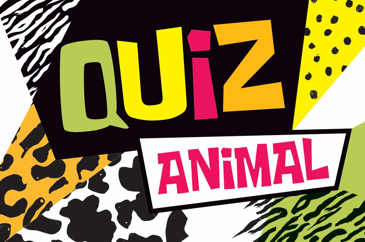 Quiz animal