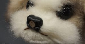 Le chien robot anti-puanteur