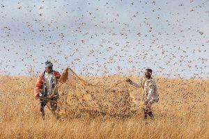 Les exploits des animaux migrateurs