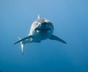 Requins malins!