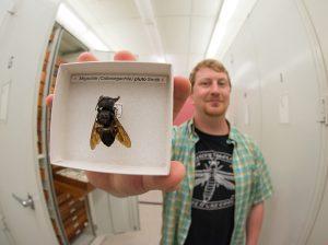 Le retour de l'abeille géante