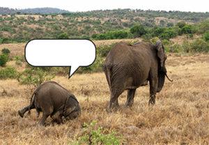 Concours : imagine ce que dit l'éléphanteau !