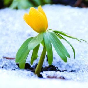 Qu'est-ce qui déclenche cette frénésie au printemps ?