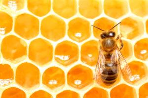 Comment les abeilles fabriquent du miel ?
