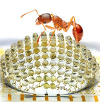 Avoir une vision d'insecte!